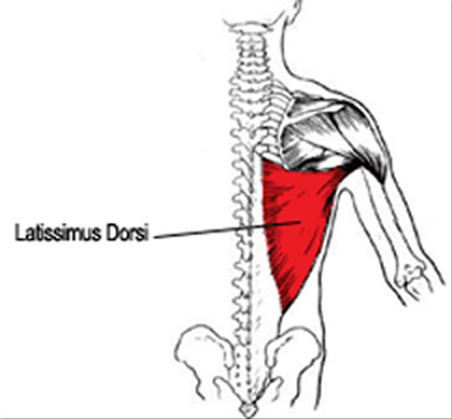 Lats: The Silent Assassin | Performance360